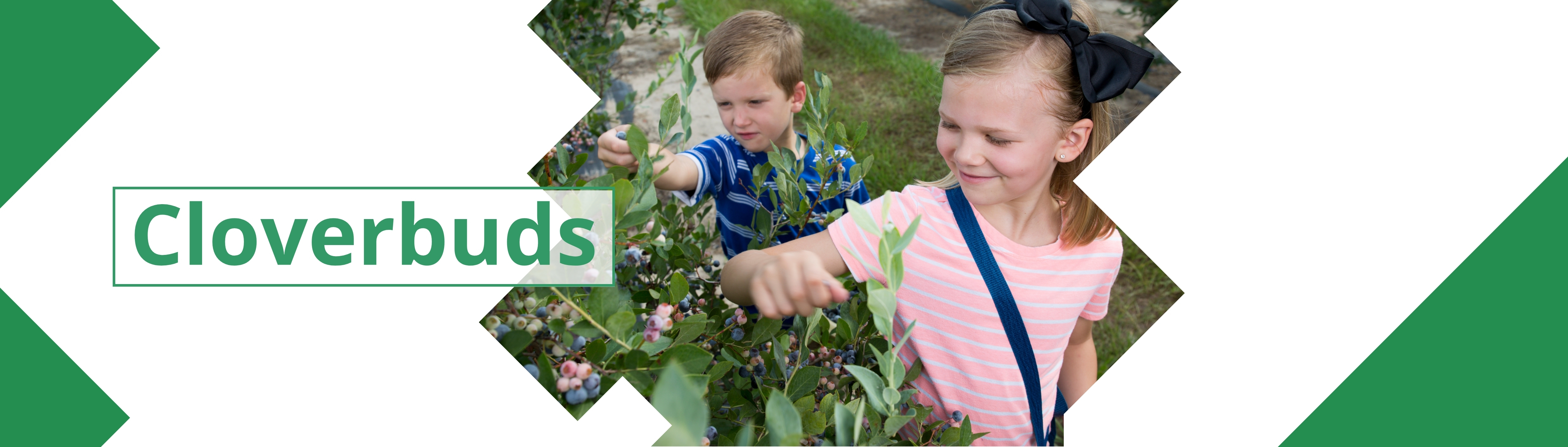 Banner image with 2 youth picking blueberries